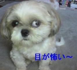 mint_20060623_2